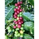 Cafés Trottet Costa Rica Caturra Semi-Lavé 10 capsules